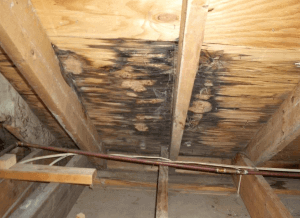 mold under roof deck